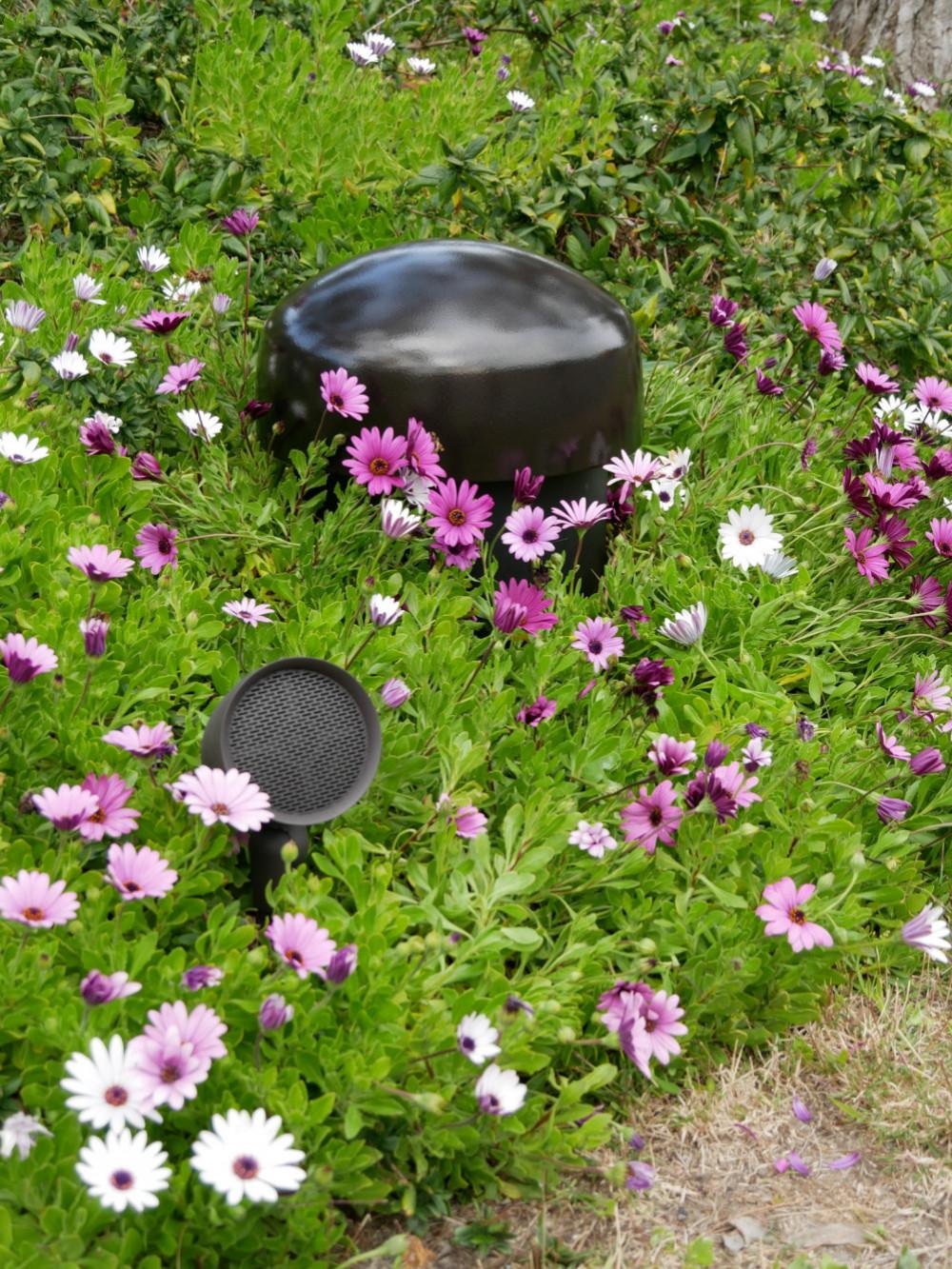 sound_garden_2.jpg